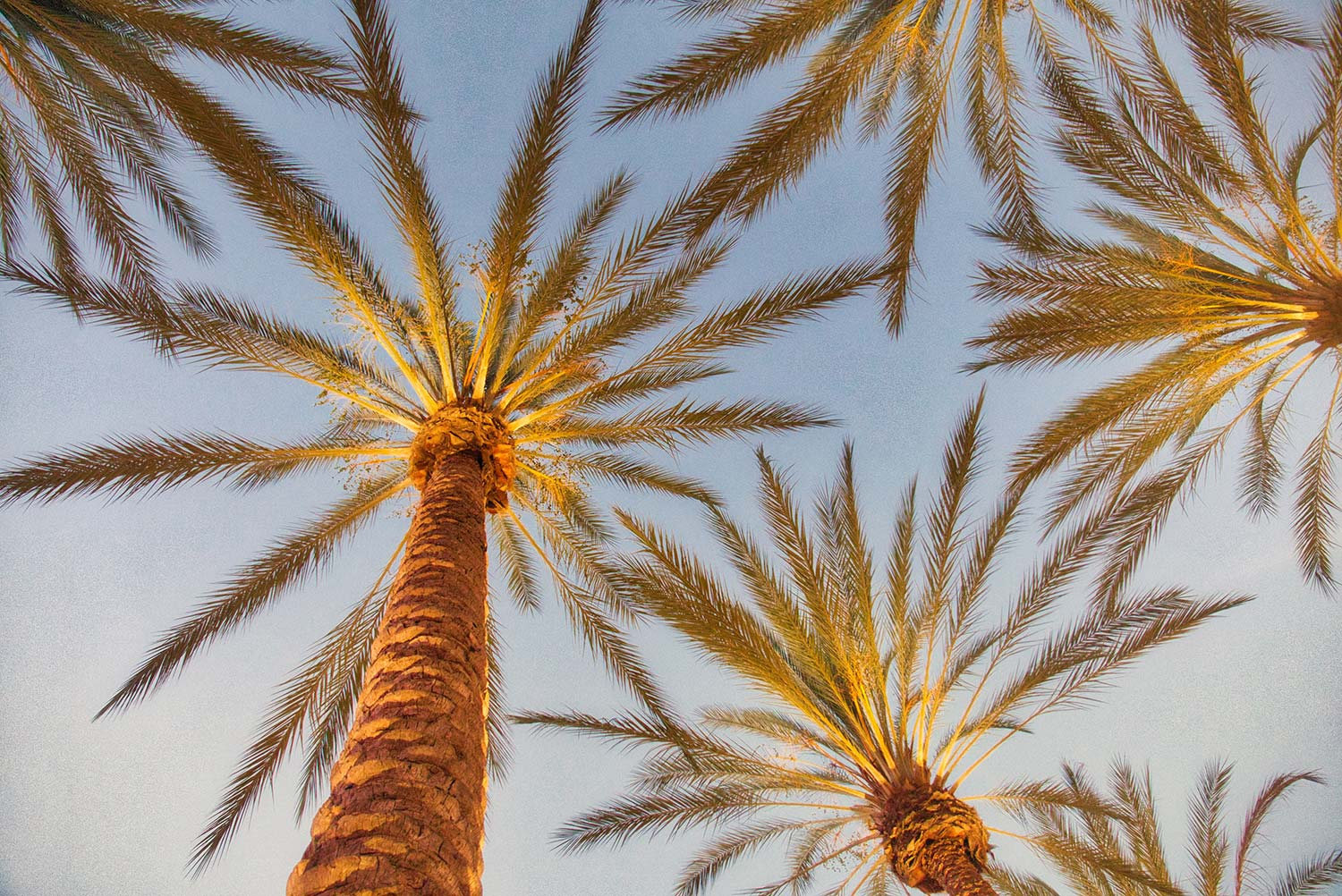 view from below a group of palm trees